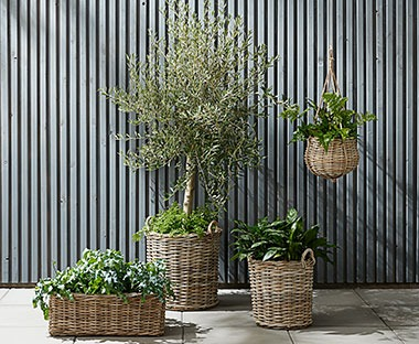 Wicker and rattan style garden planters. Hanging basket and low box planters