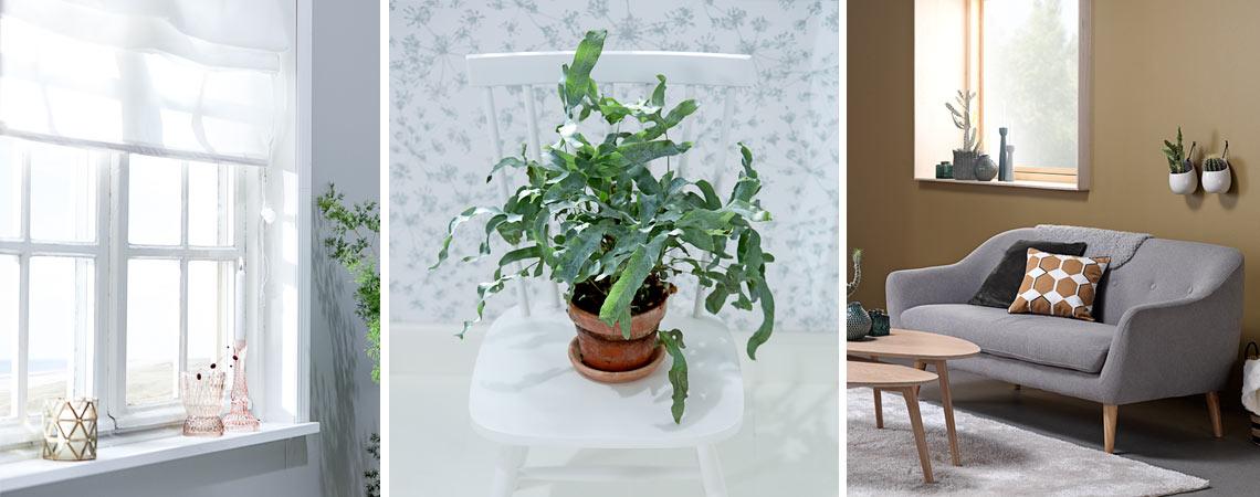 Feng Shui Your Home Decorating Tips Jysk